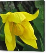 Woodland Tulip Canvas Print