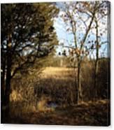 Woodland View  Canvas Print