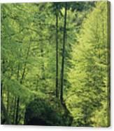 Woodland View With Stream, Sachsische Canvas Print