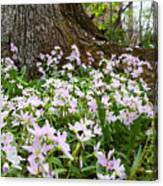 Woodlands Spring Beauty Canvas Print