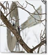 Woodpecker And Windmill Canvas Print