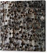 Woodpecker Holes In The Apple Tree Canvas Print