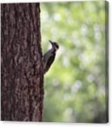 Woodpecker In New Mexico Canvas Print