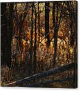 Woods - 1 Canvas Print
