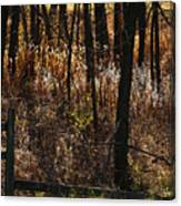 Woods - 2 Canvas Print