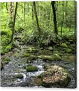 Woods - Creek Canvas Print