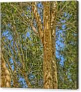 Woods Canvas Print