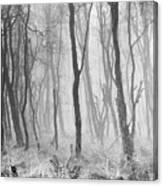 Woods In Mist, Stagshaw Common Canvas Print
