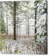 Woods In Winter At Retzer Nature Center  Canvas Print