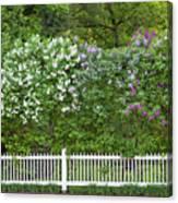 Woodstock Village Lilacs Canvas Print