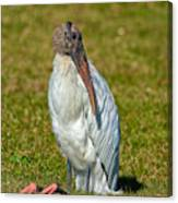 Woodstork On The Lookout Canvas Print