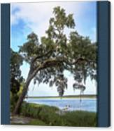 Woodstorks At Oak Grove Island Canvas Print