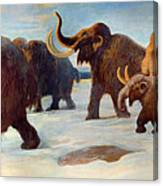 Wooly Mammoths Near The Somme River Canvas Print