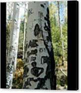 Words Written In The Trees 1 Canvas Print