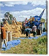 Workers Loading Rice Canvas Print