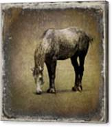 Working Horse Canvas Print