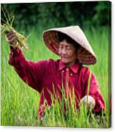 Working The Fields, Thailand Canvas Print