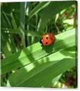 World Of Ladybug 1 Canvas Print