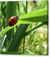 World Of Ladybug 2 Canvas Print