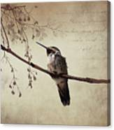 World's Smallest Bird Canvas Print