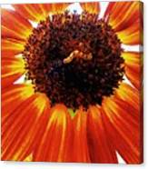 Worm And His Sunflower Canvas Print