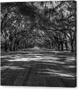 Wormsloe Plantation 2 Live Oak Avenue Art Canvas Print