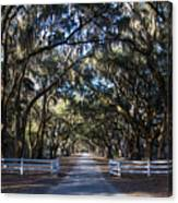 Wormsloe Avenue #2 Canvas Print