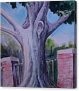 Wortham Oak Canvas Print