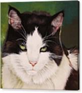 Wozzle - Domestic Cat Canvas Print