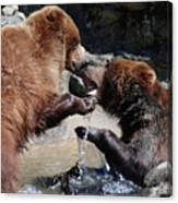 Wrestling Grizzly Bears In A Shallow River Canvas Print