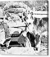 Wwi, Nell British Messenger Dog Canvas Print