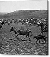 Wyoming: Cowboys, C1890 Canvas Print