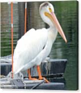 Wyoming Pelican Canvas Print