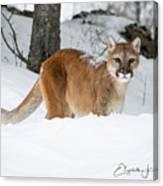 Wyoming Wild Cat Canvas Print