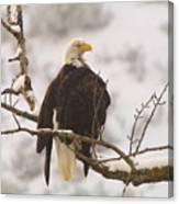 Yakama Canyon Eagle Canvas Print