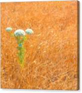 Yarrow Afloat Canvas Print