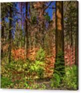 Yosemite In The Fall Canvas Print