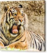 Yawning Bengal Tiger Canvas Print