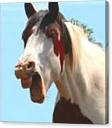 Yawning Horse ... Montana Art Photo Canvas Print