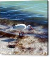 Yay Seaweed Canvas Print