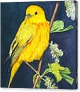 Yelllow Warbler Canvas Print