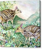 Yello-striped Mouse Deer Canvas Print