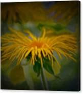 Yellow 2 Canvas Print