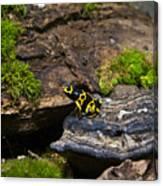 Yellow And Black Dart Frog Canvas Print