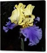 Yellow And Blue Iris Canvas Print