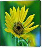 Yellow And Green 2 Canvas Print