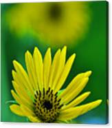 Yellow And Green 3 Canvas Print