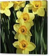 Yellow And Orange Daffodil  #2 Canvas Print