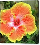 Yellow And Orange Hibiscus 2 Canvas Print
