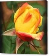 Yellow And Orange Rosebud Canvas Print
